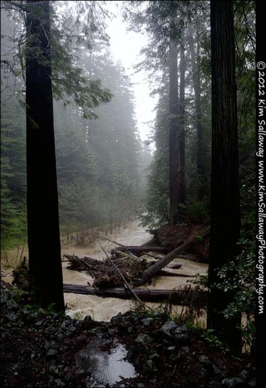 Whittemore Grove creek at Briceland Road - Photo Kim Sallaway