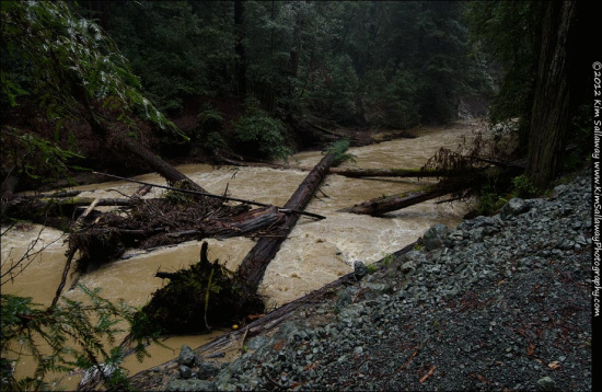 Creek in Whittemore Grove along Briceland Road - photo by Kim Sallaway